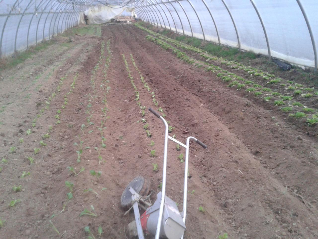 Tunnel printemps plantation