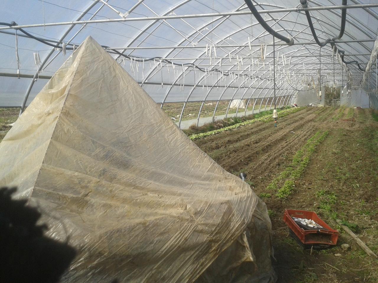Tunnel au printemps + Mini serre pyramide de semis