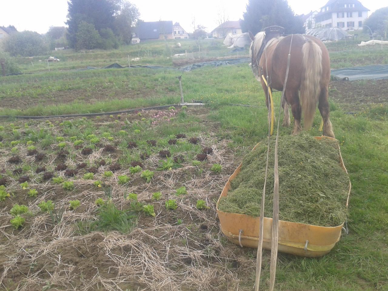 Transport de pelouse pour mulcher en traineau