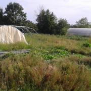 Le jardin début août