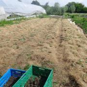 Le jardin fin mai