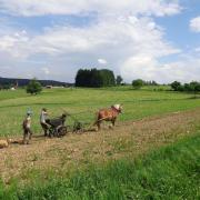 Planter des patates avec Agathe
