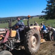Recolte de 4 tonnes de pommes de terre