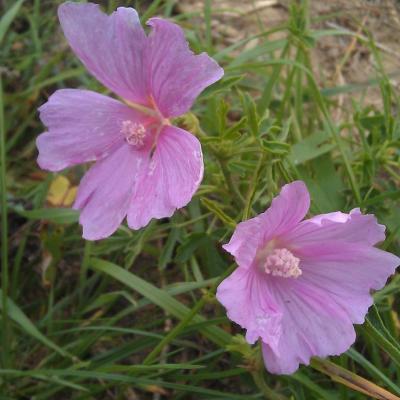 Flore du jardin