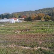 Vue d'une bonne partie de la parcelle principale de Manspach