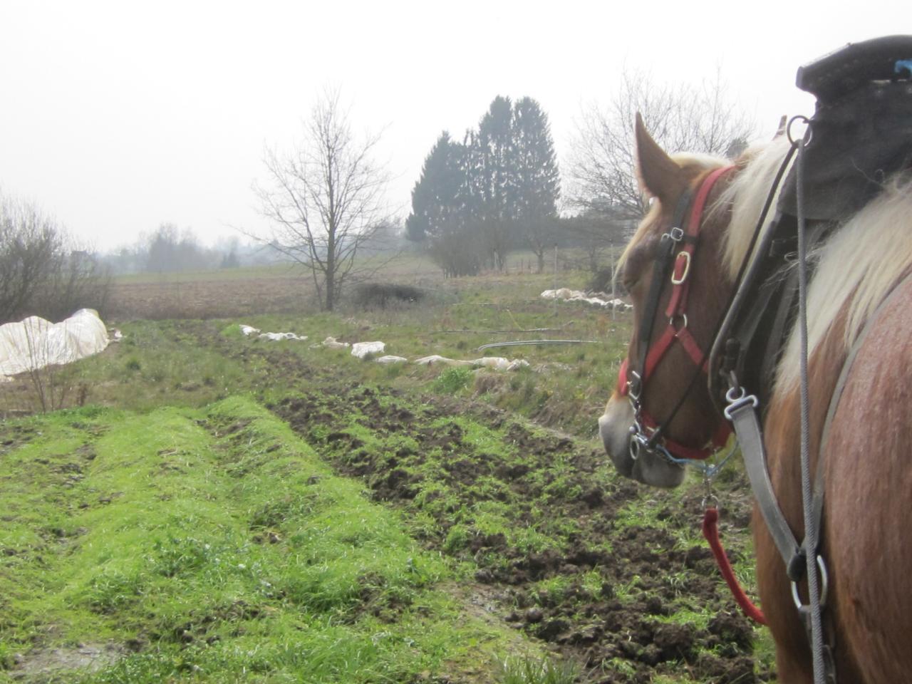 Reprise d'un sol enherbé avec des griffes équipées de pattes d'oie