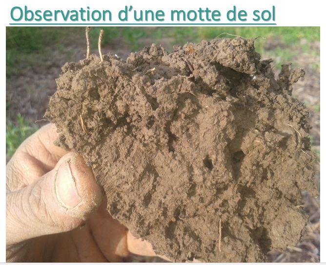 Motte sol